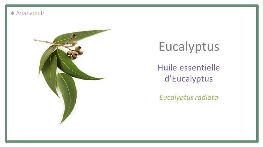 he eucalyptus est une huille essentielle d'eucalyptus radiata
