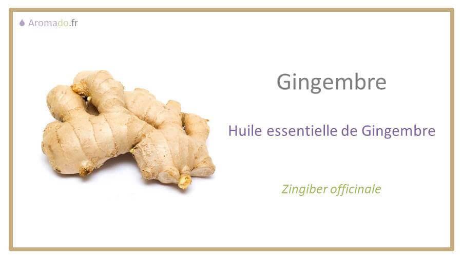 he gingembre est une huile essentielle de gingembre (zingiber officinale)