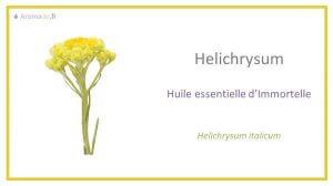 he immortelle ou huile essentielle d'hélichryse